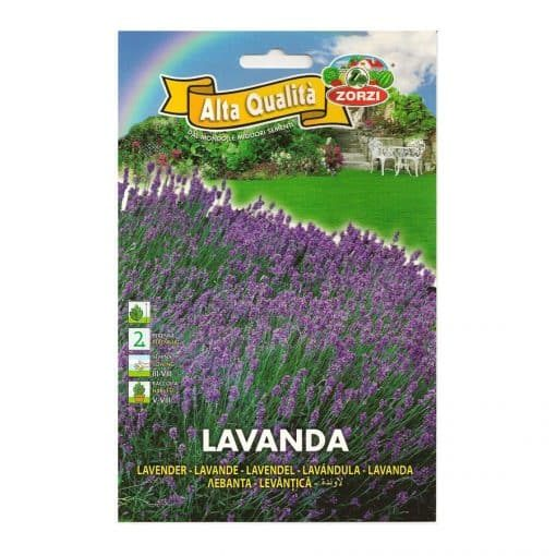 Лавандула